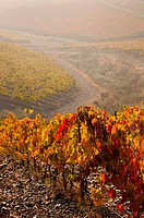 Douro vineyards  Portugal