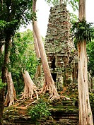 Tropical trees around the temples of Angkor Wat