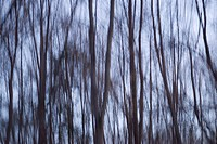 Blurred Motion View of Bare Trees at Dusk in a Forest during the Winter Season, Warwick, New York State, USA