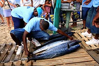 The Nevis Fishing Competition in the Caribbean