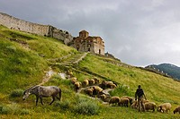 Sheep below Holy Trinity Church in Berat Castle