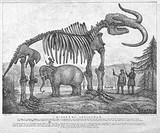 Mammoth skeleton exhibit, 1842. This exhibit, called the Missouri Leviathan, was part of Koch´s Missourium. This was a reliquia of animal indigenous t...