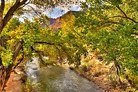 North Fork, Virgin River, Zion National Park, Utah, USA