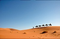 Lined up camel caravan at the sand dunes of the Sahara desert