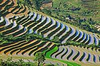Rice terraces, Sapa,Vietnam