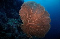 Coral in Sipadan, Borneo, Malaysia