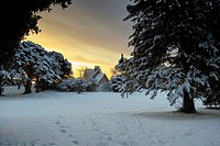 A snow covered St. Anne's Park at dawn, Dublin, Ireland