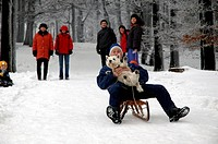 Man with dog sledging, snowy forest near Botterode, Inselberg, Thueringer Wald, Thuringia, Germany