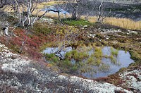 Water hole in fjell landscape in Rondane National Park, Norway, Europe