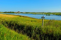 Nature reserve De Petten, near Den Hoorn, Island of Texel