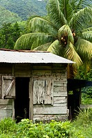 Farmer's home on a pineapple farm, White River, Delices, Dominica, Windward Islands, West Indies, Caribbean, Central America