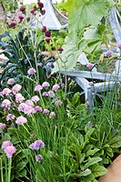 M&G INVESTMENTS GARDEN DESIGNED BY BUNNY GUINESS. RAISED BED WITH ZINC CLOCHES TUSCAN KALE ALLIUM SCHOENOPRASUM CHIVES AND RUMEX ACETOSA SORREL ´BLOOD...