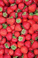 strawberries, tammelantori market, tampere, finland, europe