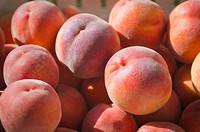 peaches in the sunlight, berkeley, california, united states of america