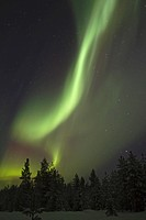 Aurora Borealis, over snow covered coniferous forest at night, Finland, february
