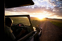 A Man Drives A Vehicle Down A Dirt Road At Sunset, Kenya Africa