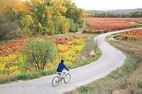Enjoying Rioja landscape, at autumn season, La Rioja, Spain, Europe