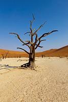 Namibia, Hardap region, Namib desert, Namib_Naukluft national park, Deadvlei