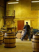 France, Cote d´Or, Beaune, feature: the Cooperage, Tricolored Fire, finished barrels