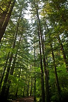 South Korea, Gangwon Province, Odaesan National Park, tall trees