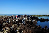 Ecuador, Galapagos Islands, listed as World Heritage by UNESCO, Isabela Island, Puerto Villamil, Tintoreras island, tourists hike