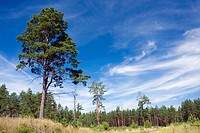 Cepkeliu National Nature Reserve, Lithuania, Europe