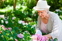 Woman looking at flowers while pruning