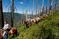 Horsepacking into Meadow Creek from Indian Hill in the Nez Perce National Forest, ID.