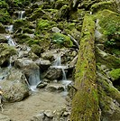 Creek in the Steinwandklamm canyon, Triestingtal valley, Lower Austria, Austria, Europe