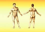 Color enhanced illustration of pressure points on a male body. Pressure points are used by many forms of therapy and medicine acupuncture, massage, et...