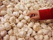 Woman buying garlic in supermarket