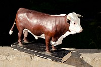 retro brown bull educational moulage