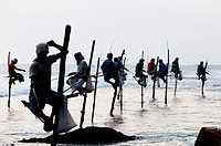 Stilt fishermen perched on their poles in Midigama, Sri Lanka