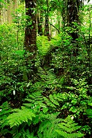 Lush green tropical rain forest