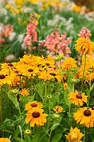Summer flower bed with Marigold and Snapdragons