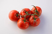 Closeup of tomatoes on stem isolated