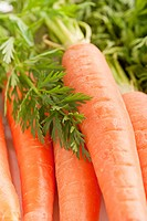 Close up of fresh organic carrots