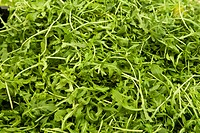 Pile of arugula for sale in market