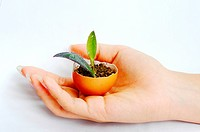 Sprout in an eggshell in a girl´s hand