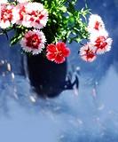 blossom clove flowers