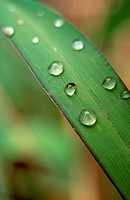 water drops on blade of grass, close_up, nature stock photography