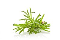 Rosemary bunch bound with brown twine isolated on white background. Culinary aromatic herbs.