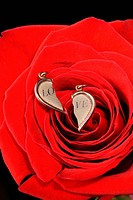 Ring in a red rose. A jewelry on a blossoming bud of a flower
