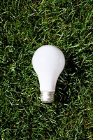 Incandescent light bulb laying on green grass