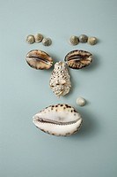 Seashells arranged into a face