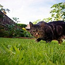 Cat prowling in garden