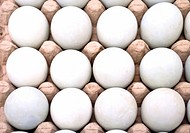 Dozen white fresh eggs in a cardboard