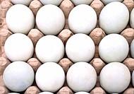 Dozen white fresh eggs in a cardboard