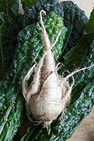 A parsnip and leaves of chard