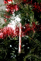A candy cane hanging from a Christmas tree
